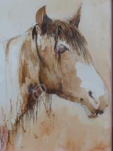 Mustang - Watercolour